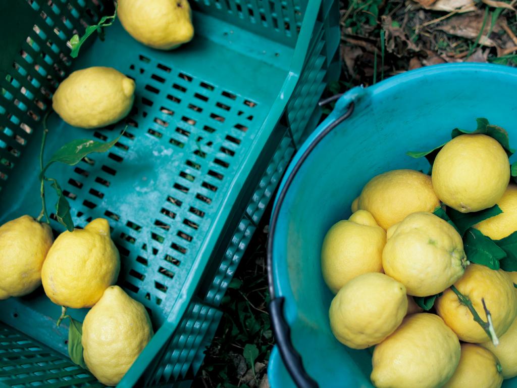 limone02