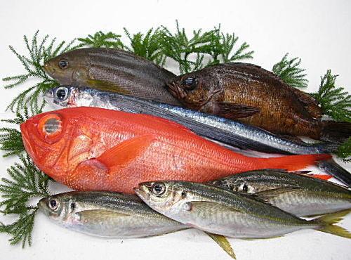 産地直送地魚お試しセット