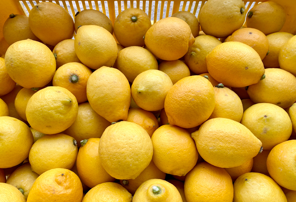 とびしま柑橘工房 レモン
