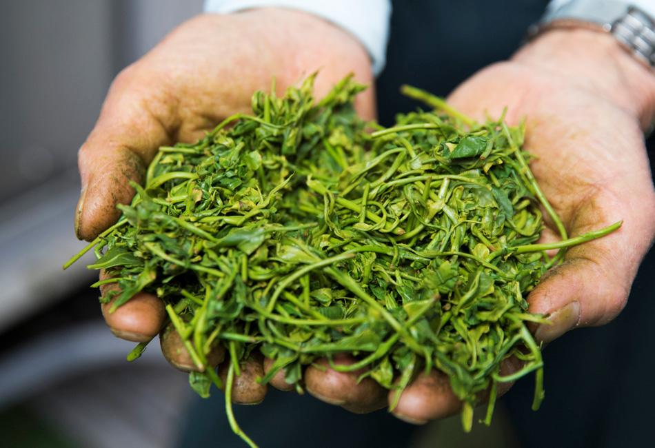 大井川農協 緑茶 愛ことはじめ 茶葉
