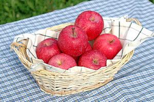 りんごお試しセット